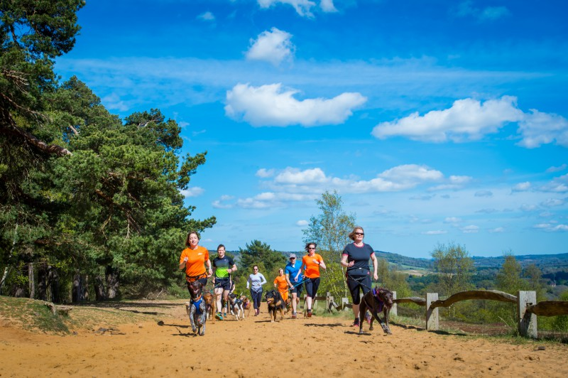 Group of runners with dogs, canicross