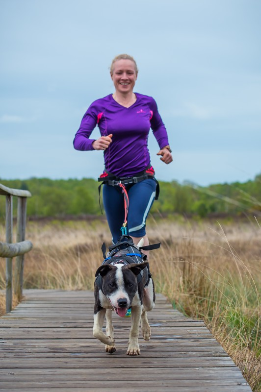 Woman running with her dog on a canicross harness and waist belt