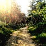 Trail through the tress Wild running routes